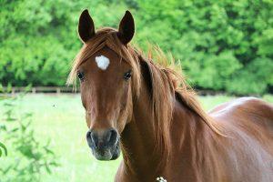 Pferde Versicherung